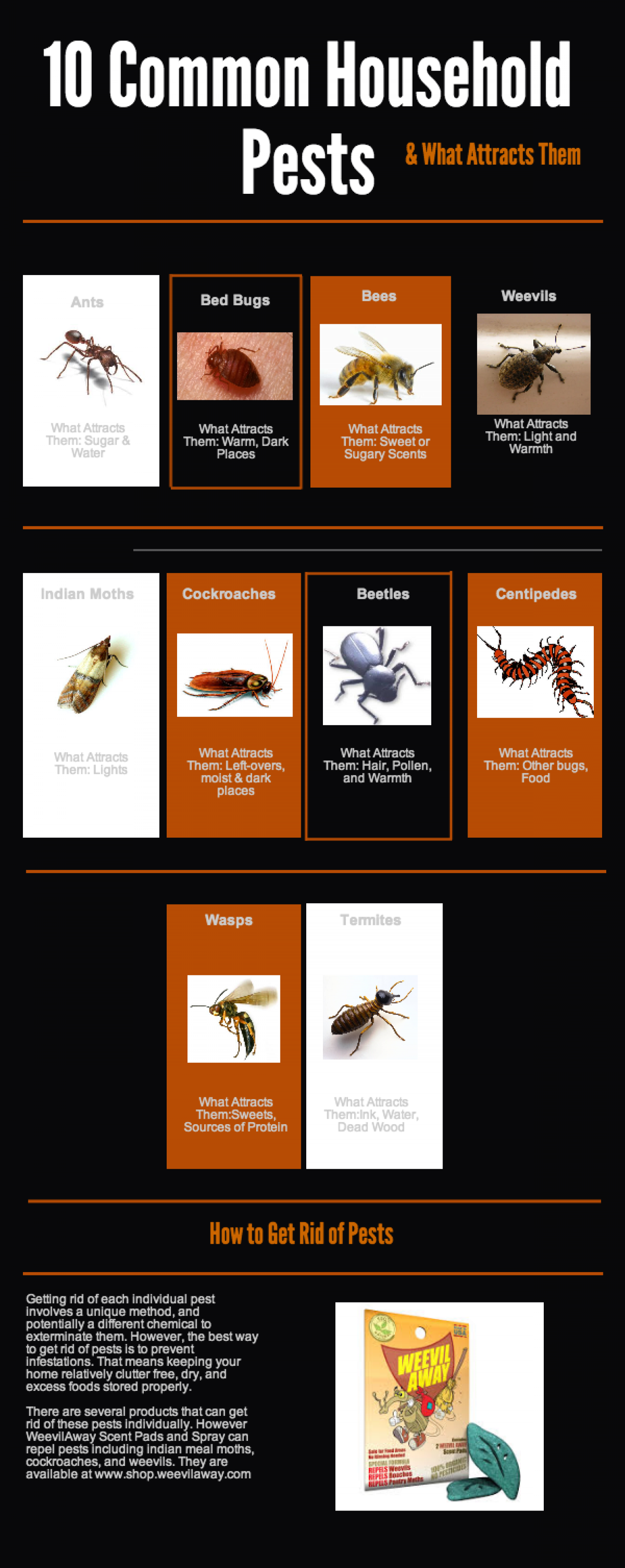 10 Common Pests & What Attracts Them Infographic