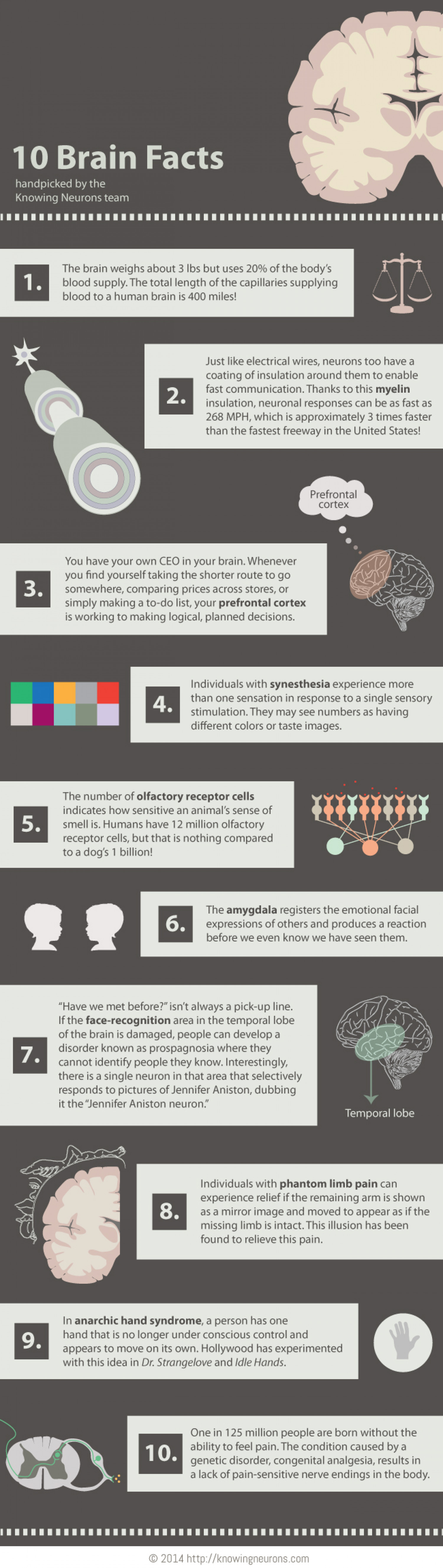 10 Brain Facts Infographic