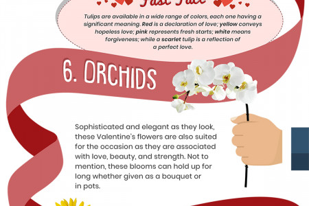 10 Valentine's Flowers and their Romantic Meanings Infographic