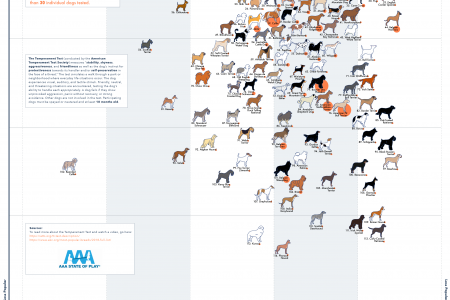114 Dog Breeds Ranked by Temperament  Infographic