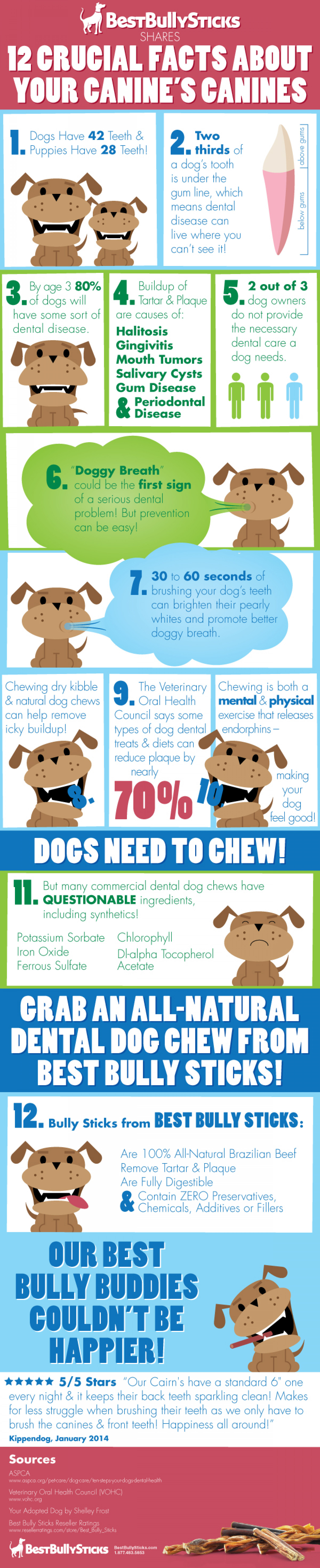 12 Crucial Facts About Your Canine's Canines Infographic