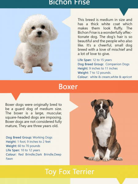 12 Low maintenance dog breeds Infographic