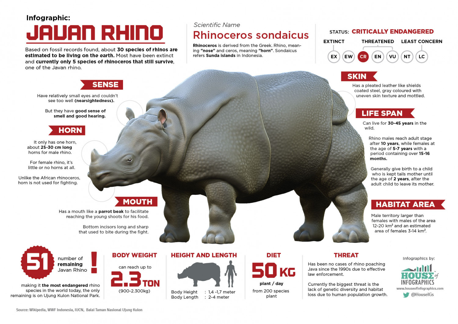 13 Things You Might Not Know About Javan Rhino Infographic