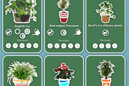 15 Low-Maintenance Indoor Plants to Purify the Air in Your Home or Office Infographic