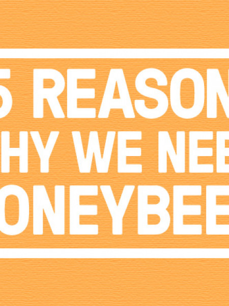 15 reasons why we need honeybees Infographic