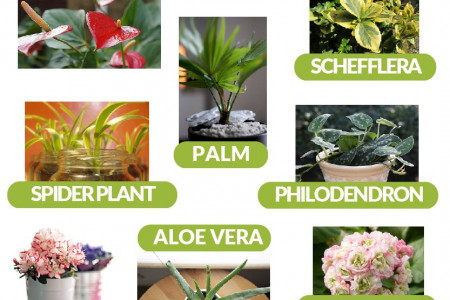 18 of the best House Plants to help purify the air in your home Infographic