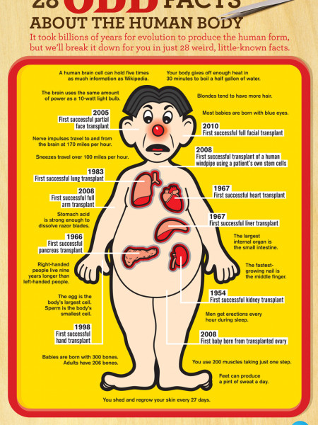 28 Odd Facts About the Human Body Infographic