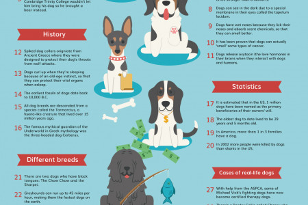 30 Insane Facts About Dogs Infographic