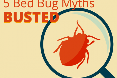 5 Bed Bug Myths Busted Infographic