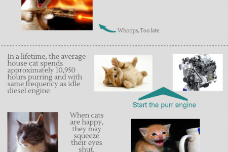 5 cool things to know about your cat Infographic