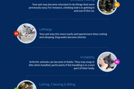 5 Signs of Arthritis in Dogs and Cats – Infographic Infographic