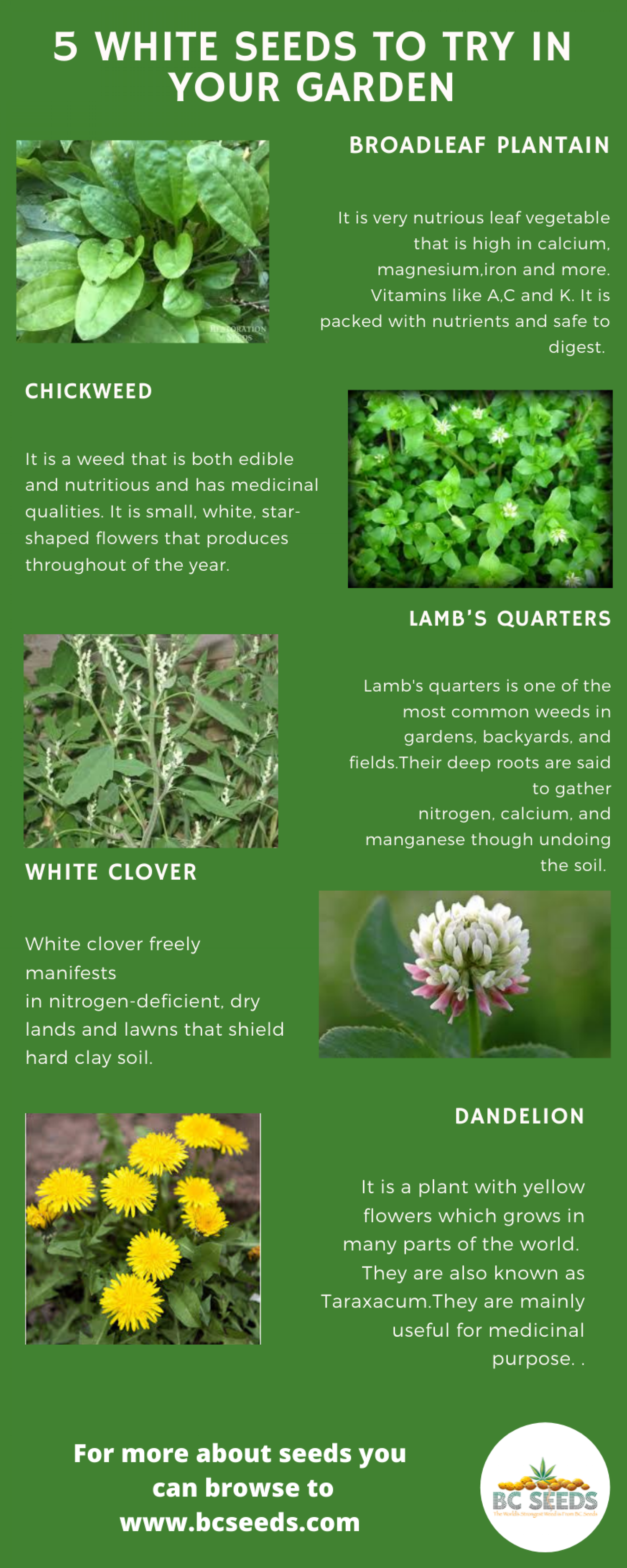 5 White Seeds To Try in Your Garden Infographic