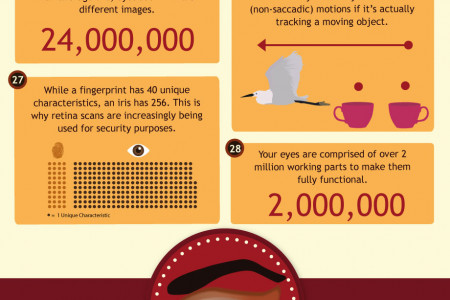 50 Insane Facts About The Eye Infographic