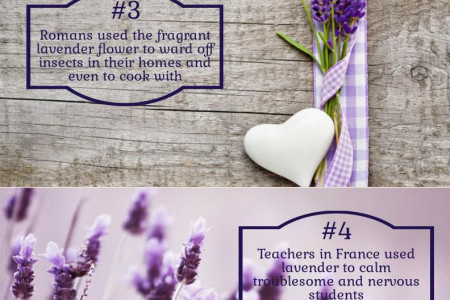 6 Fun Facts About Lavender Infographic
