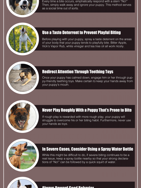 6 Tips for Training Your Puppy to Never Bite Infographic
