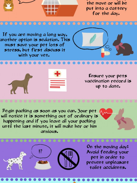 6 Essential Tips on How to Move Out with Your Pet  Infographic