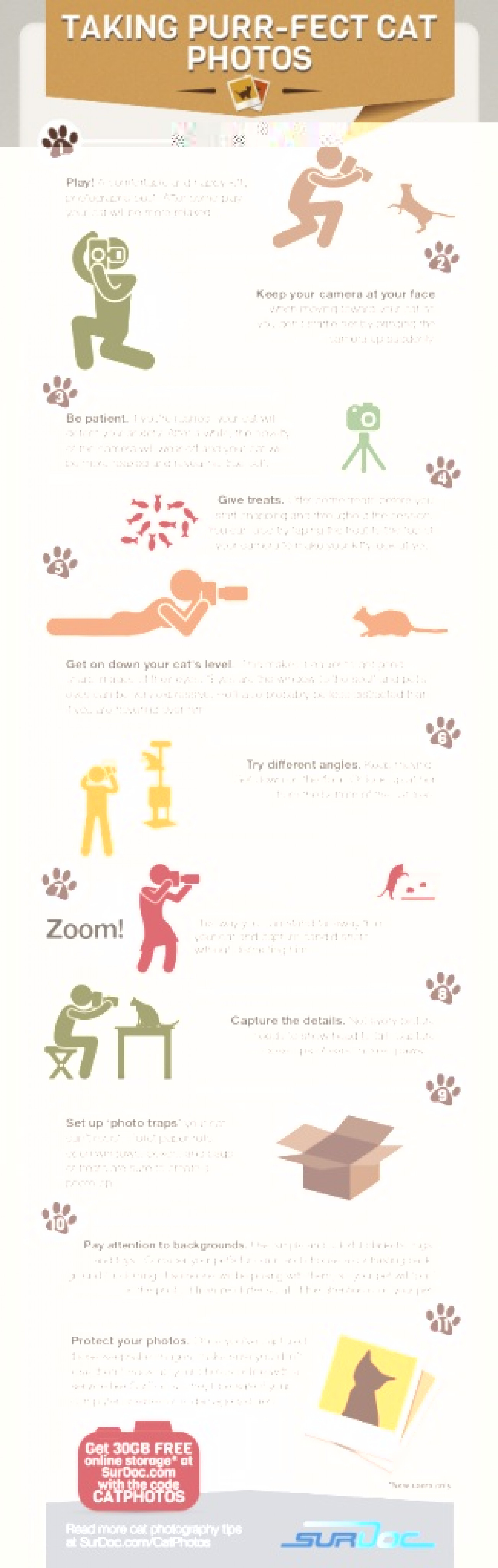 7 Steps to Taking Purfect Cat Photos Infographic