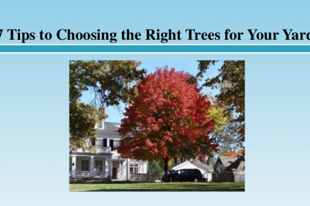 7 Tips to Choosing the Right Trees for Your Yard Infographic