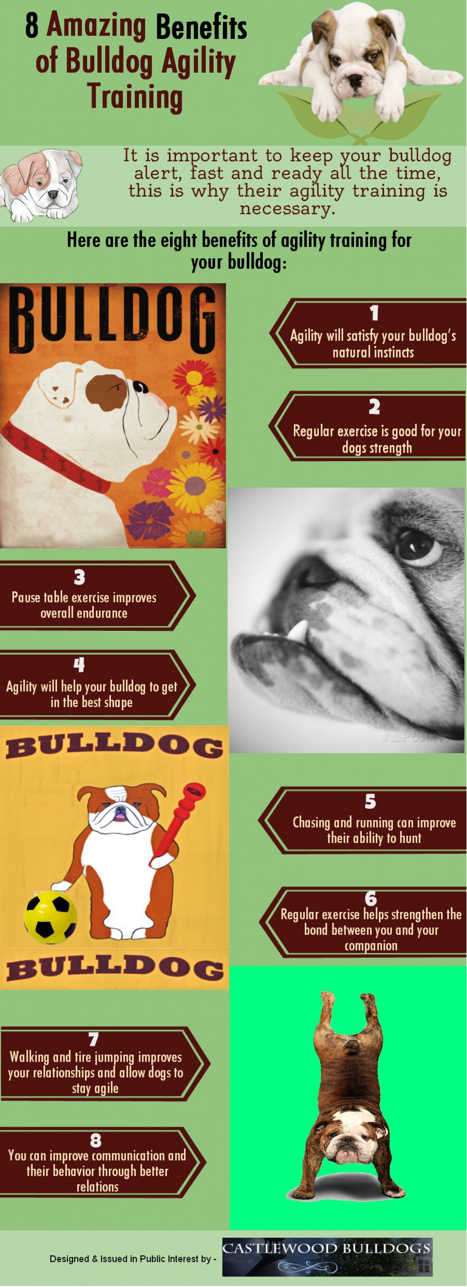 8 Amazing Benefits of Bulldog Agility Training Infographic