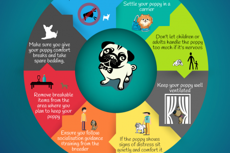 8 Tips On How To Make Your New Puppy As Relaxed As Possible Infographic