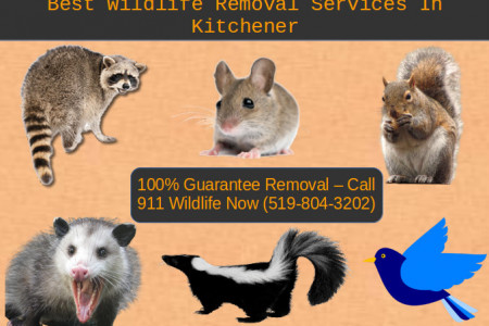 911 Wildlife | Best Wildlife Removal Services In Kitchener Infographic