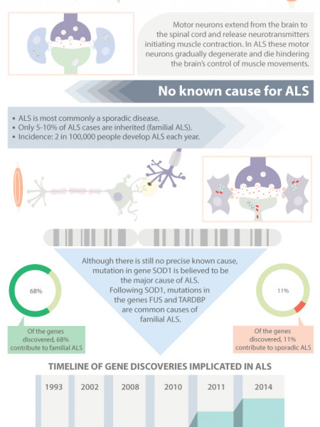 ALS (Amyotrophic Lateral Sclerosis) Infographic