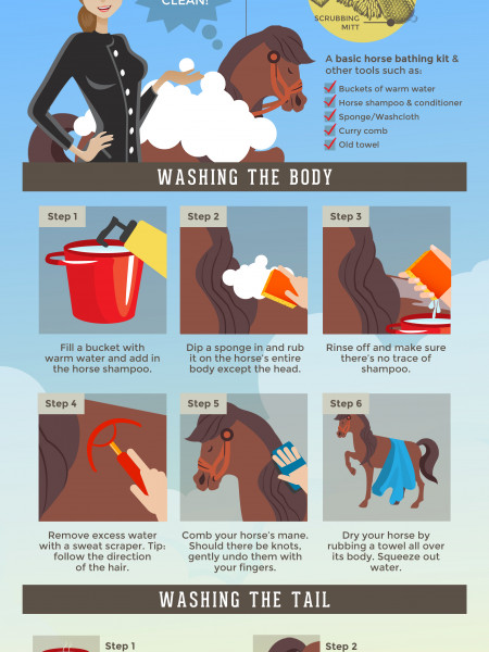A Step-by-Step Guide to Bathing Your Horse Infographic