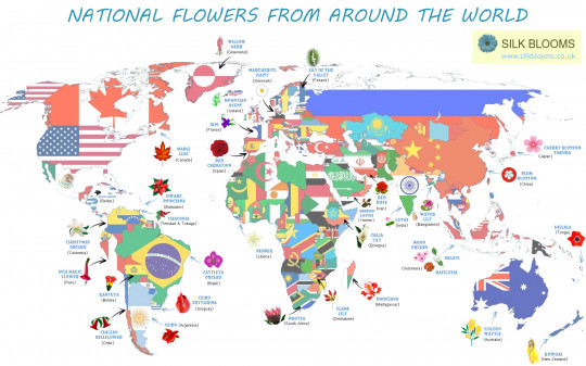 Around the World in 32 Flowers
