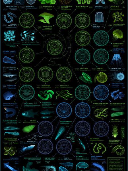 A visual compendium of bioluminescent creatures Infographic