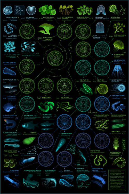 A visual compendium of bioluminescent creatures