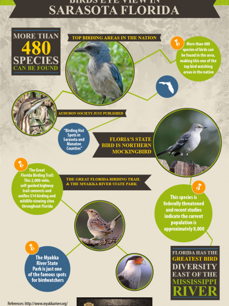 Birds Eye View in Sarasota Florida Infographic