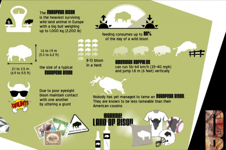 Bison Infographic
