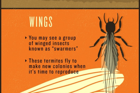 Detecting Termite Infestations in Your Home Infographic