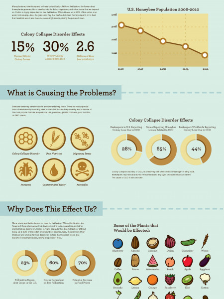 Disappearing Bees Infographic