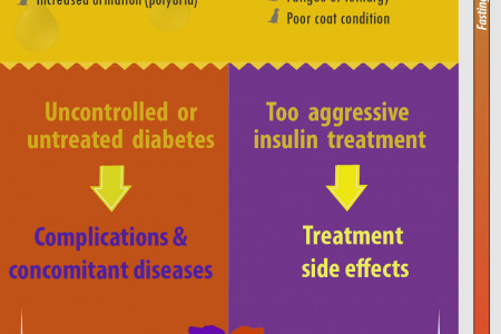 Dog diabetes symptoms evolution and origins Infographic