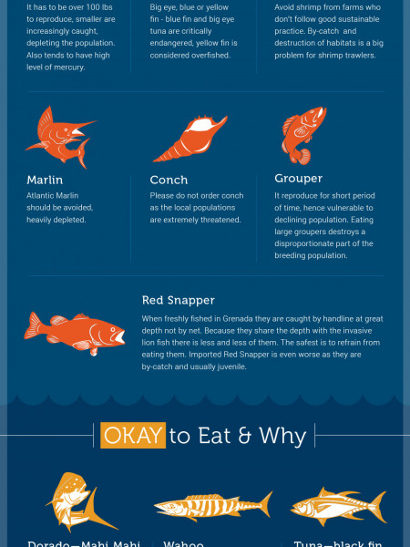 GRENADA- Sustainable Seafood Guide  Infographic