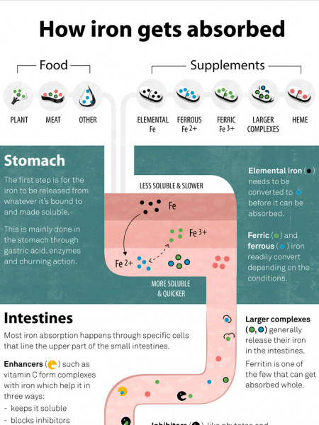 How Iron Gets Absorbed Infographic