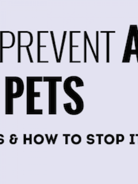 How to Prevent Pet Abuse Infographic