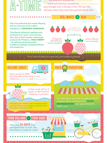 Hula Berry Origins Infographic