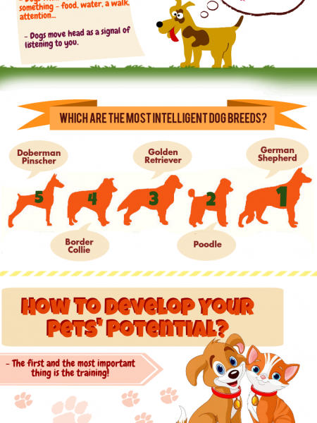 Interesting Facts About Pets Infographic