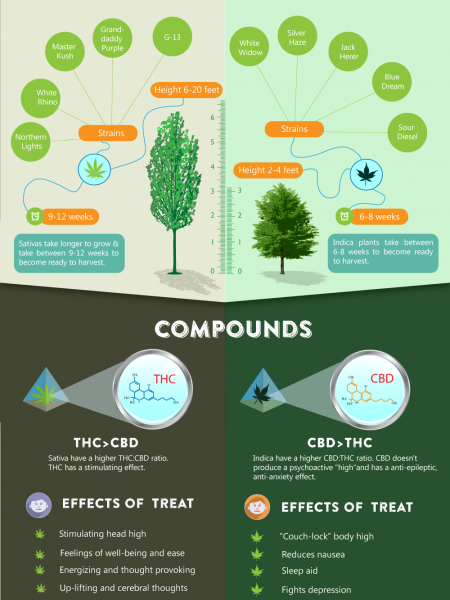 Sativa vs Indica Infographic