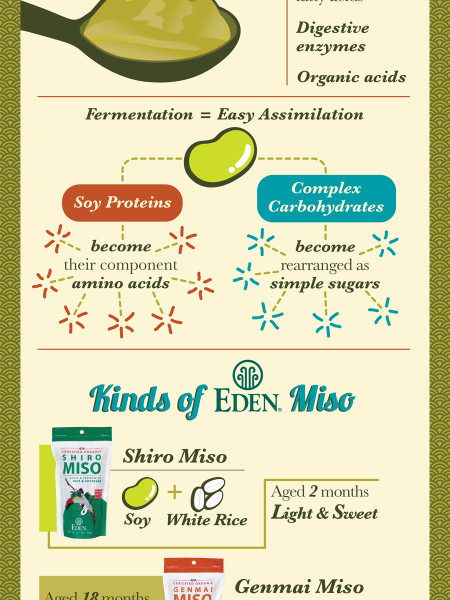 Miso Notes Infographic