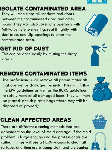 Mold Remediation - The Professional Method Infographic