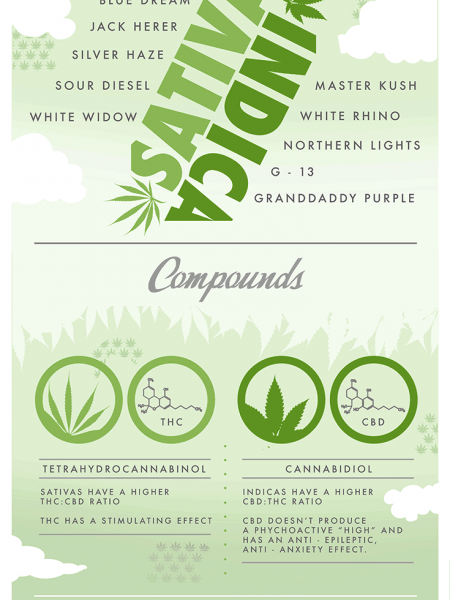 Sativa vs Indica Marijuana Infographic