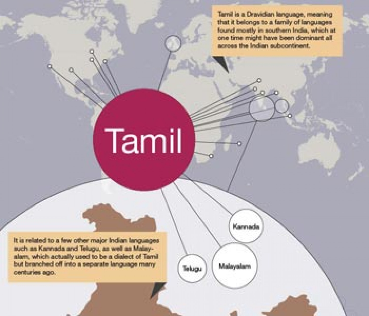 Tamil Language Infographic Infographic