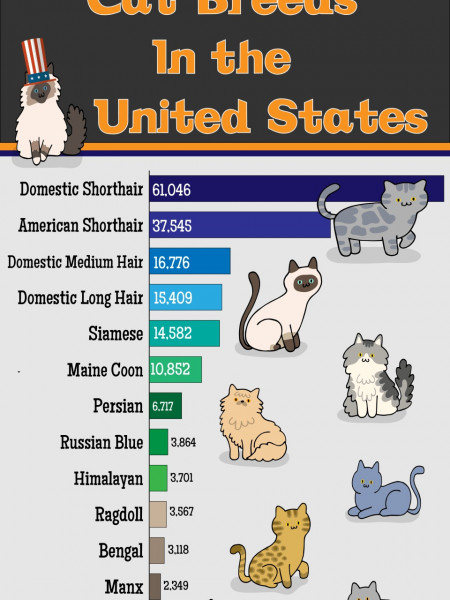 The Most Popular Cat Breeds in the USA Infographic
