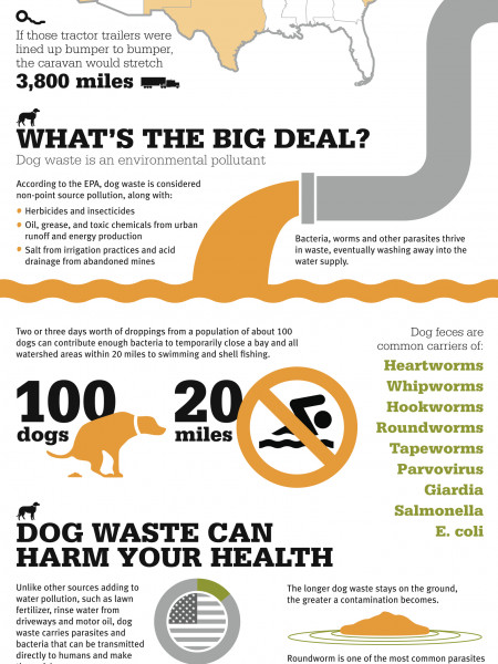 The Real Scoop on Dog Poop Infographic