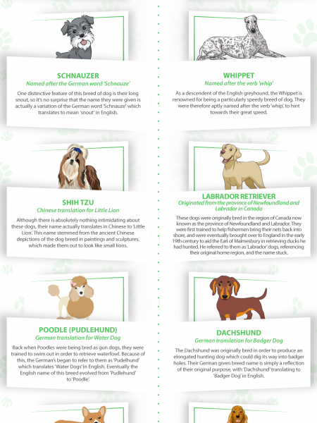 The Stories Behind Popular Dog Breed Names  Infographic
