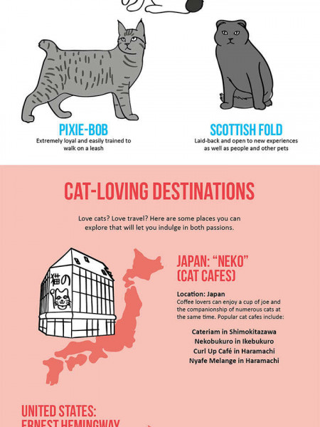 The World According to Cats Infographic