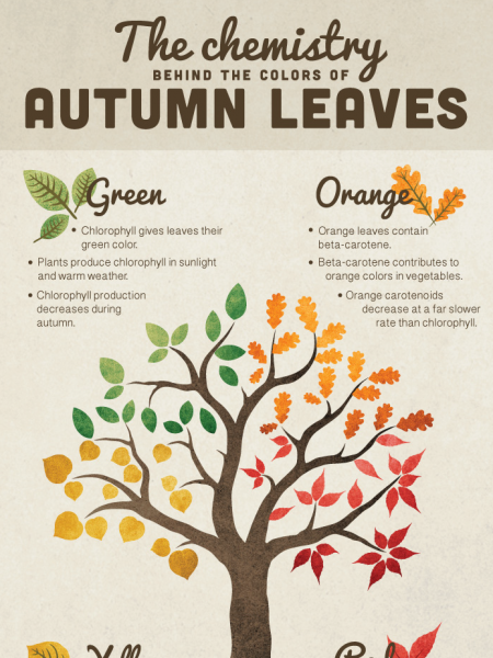 The chemistry behind the colors of autumn leaves infographic Infographic